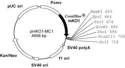 Plasmid map of pmKO1-MC1