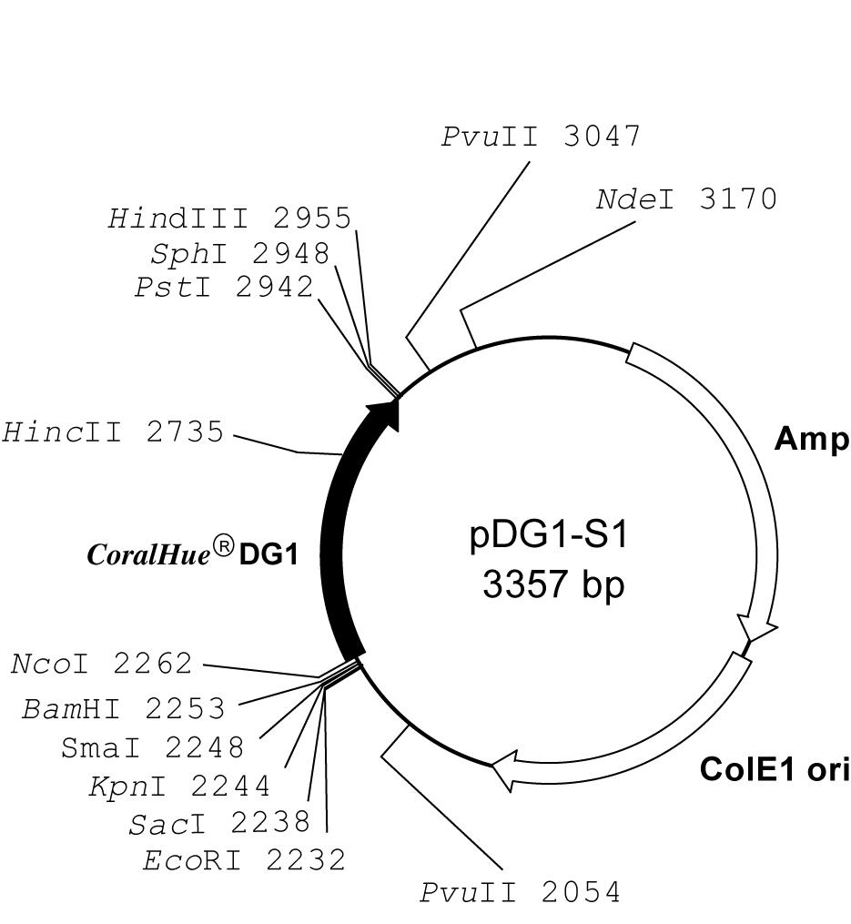 Plasmid map of pDG1-S1