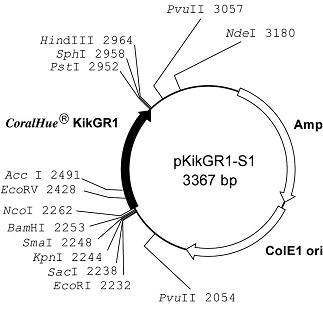Plasmid map of pKikGR1-S1