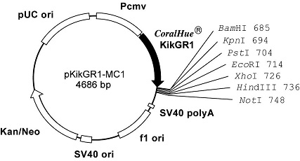 Plasmid map of pKikGR1-MC1