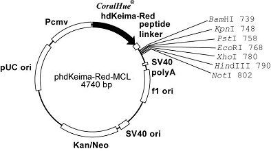 Plasmid map of phdKeima-Red-MCL