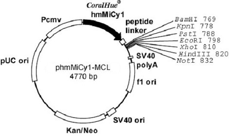 Plasmid map of phmMiCy1-MCL