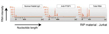 Characterization of isolated RNA with Bioanalyzer