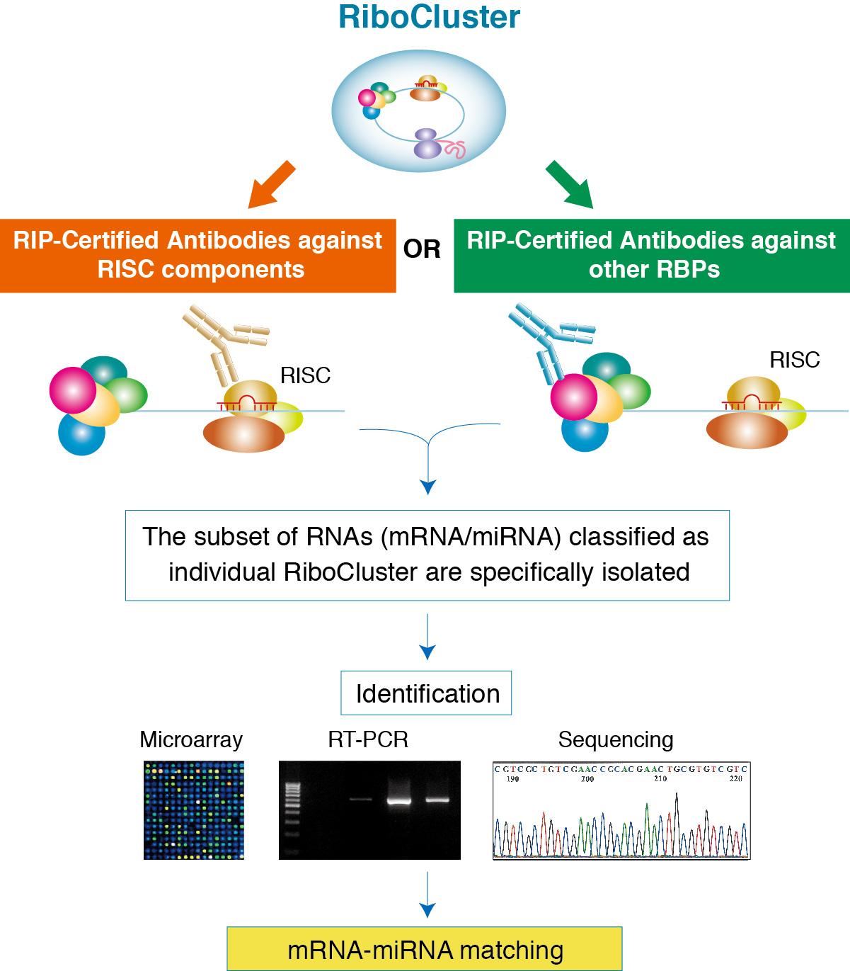 RIP-Assay Kit For MicroRNA