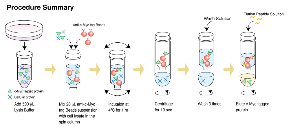 c-Myc-tagged Protein Mild Purification Kit | MBL Life Sience -ASIA-