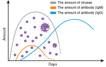 Response of antibodies in different classes to pathogens